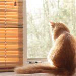 Mačka med karanteno
