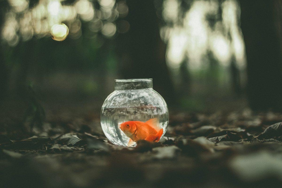 Riba v akvariju (ilustracija k zbirki (Nes)končni modeli kratke zgodbe)